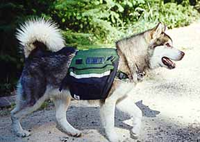 [Pooch-Packer (Dog w/backpack)]