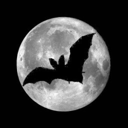[Bat over moon]