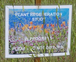 [Sign: Plant Regeneration Study In Progress]
