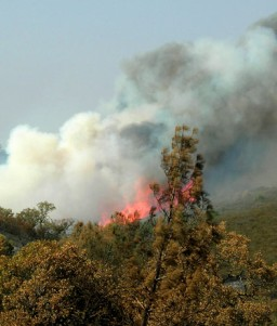[Lick Fire at Henry Coe State Park]
